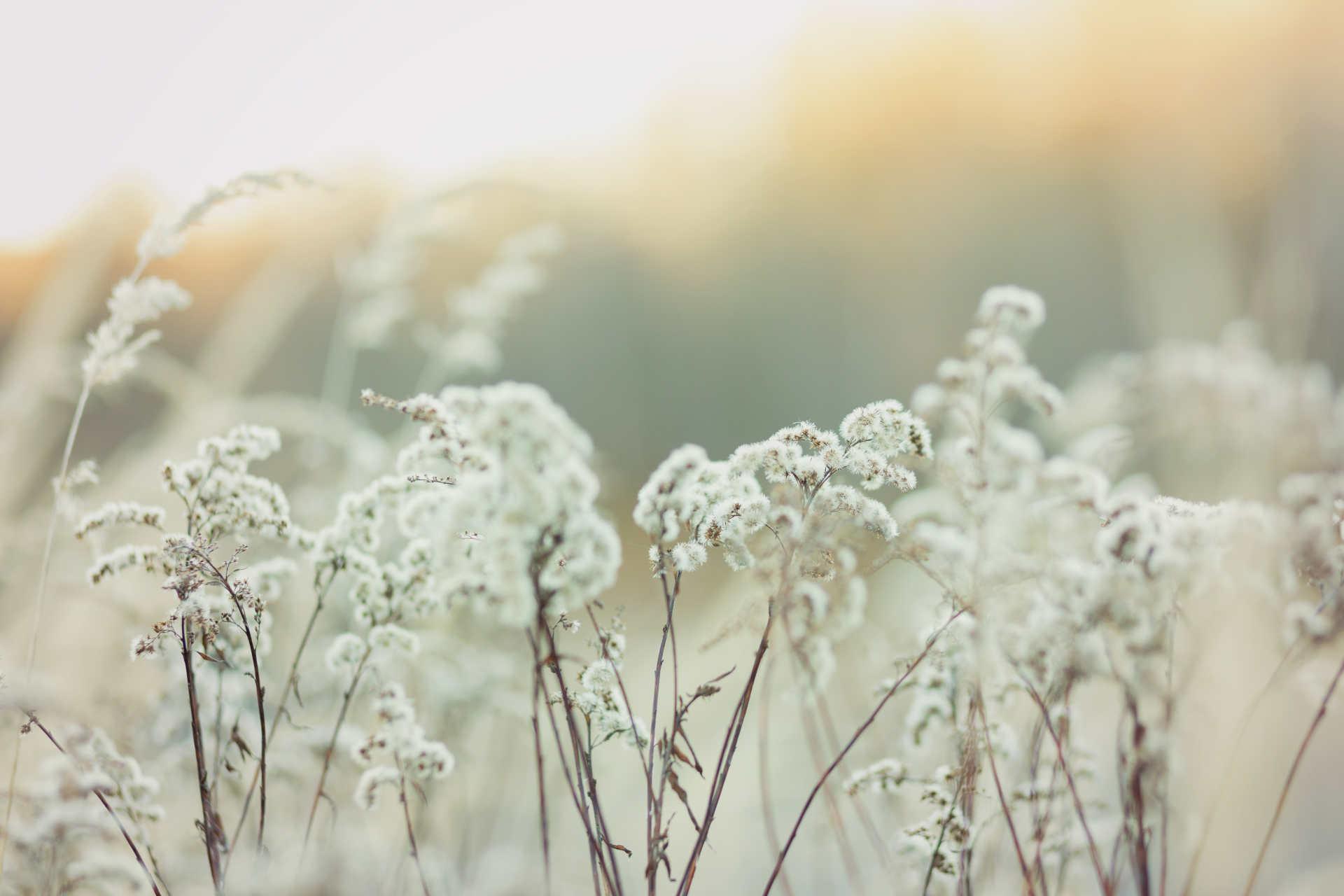 Vista de flores silvestres