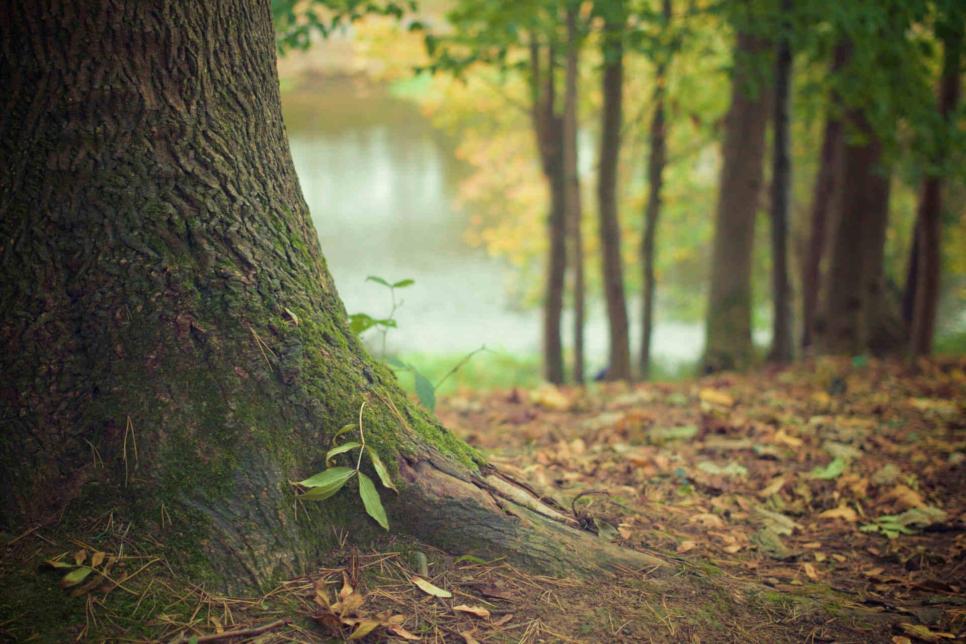Bosque en otoño con brote de planta verde en base de arbol